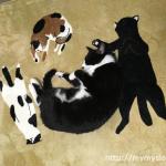 おにゅーのラグと猫